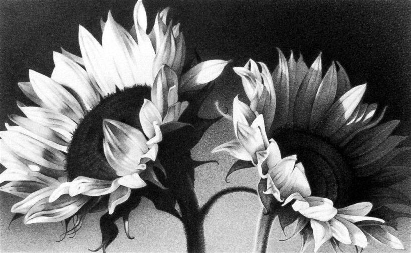 vẽ tranh đề tài hoa hướng dương vẽ chì đẹp