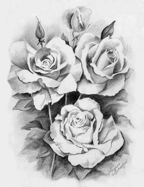 Vẽ tranh hoa hồng