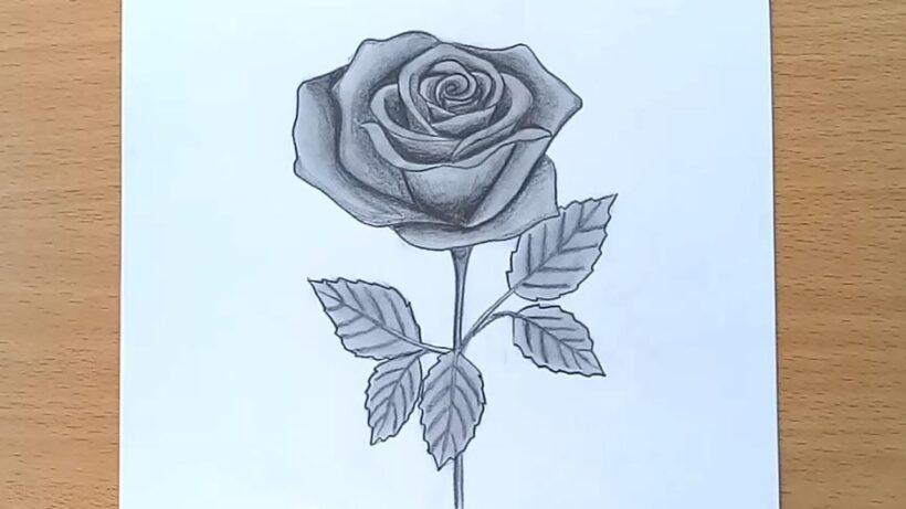 Vẽ tranh hoa hồng cực đẹp