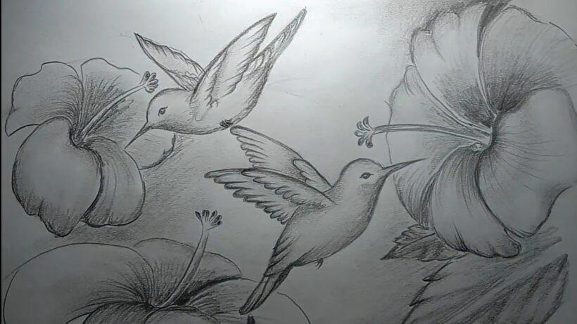 Vẽ tranh hoa và chim bằng bút chì đẹp