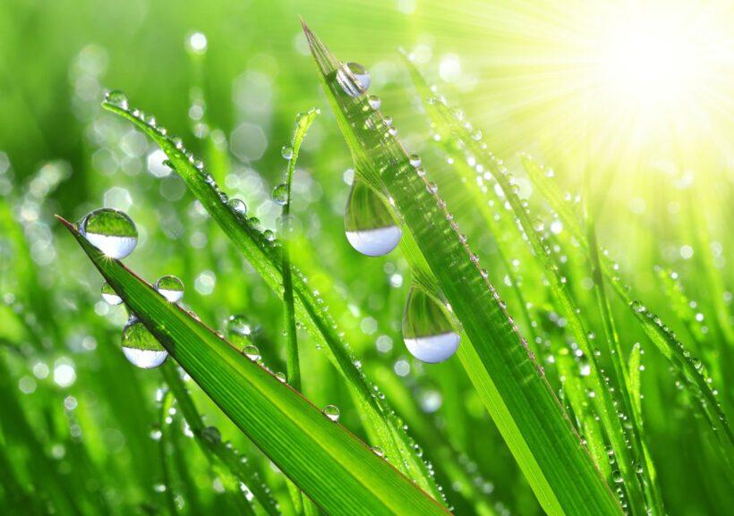 Ảnh giọt nước đọng trên cỏ cây