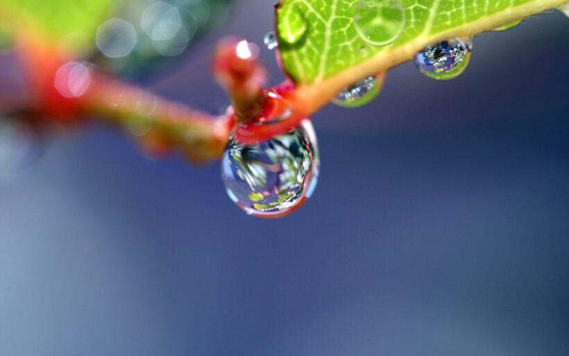 Ảnh giọt nước đọng trên lá