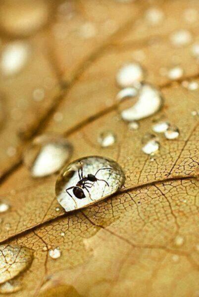 Ảnh giọt nước đọng trên lá cây đẹp