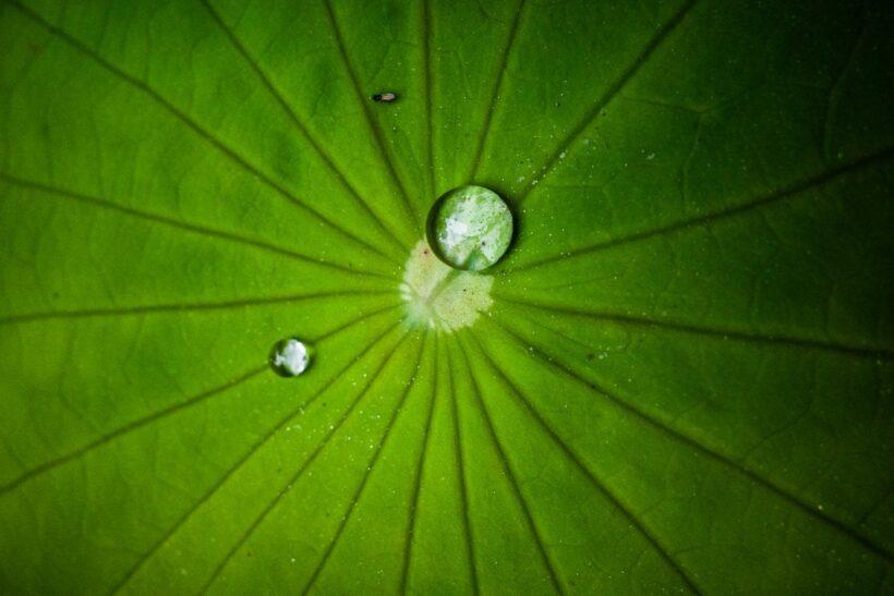 Ảnh giọt nước đọng trên lá sen