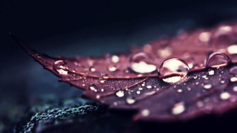 Ảnh nền giọt nước trên lá