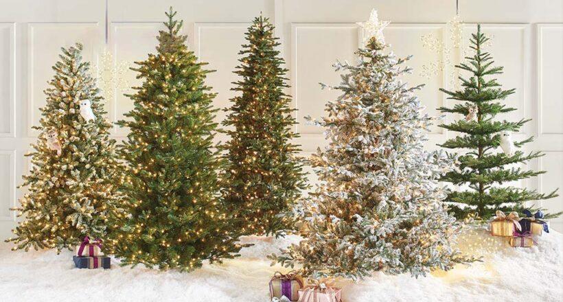 ảnh những cây thông Noel
