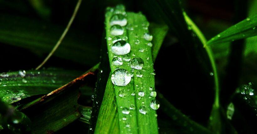 Ảnh những giọt nước đọng trên cây cỏ đẹp
