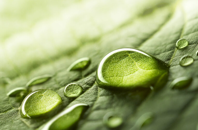 Large,Beautiful,Drops,Of,Transparent,Rain,Water,On,A,Green