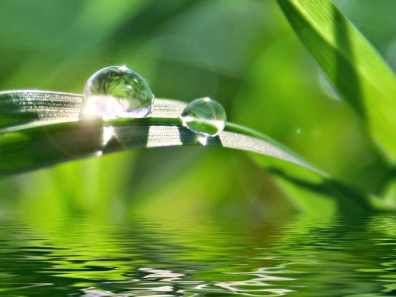giọt nước đọng trên lá đẹp