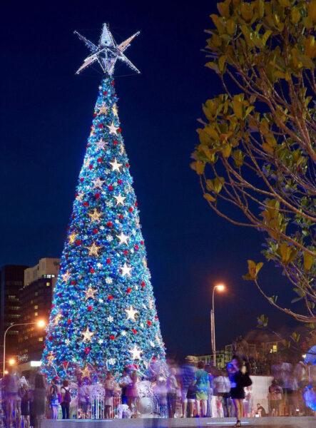 Hình ảnh cây thông Noel cực đẹp