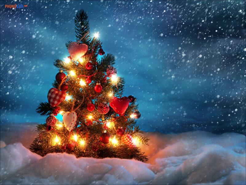 Hình ảnh cây thông Noel đẹp lung linh