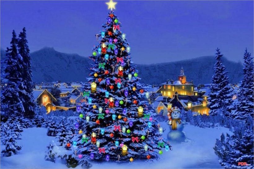 Hình ảnh cây thông Noel đẹp nhất thế giới
