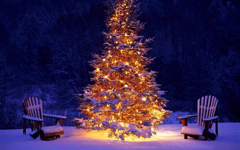 Hình ảnh cây thông Noel sáng rực rỡ trong đêm