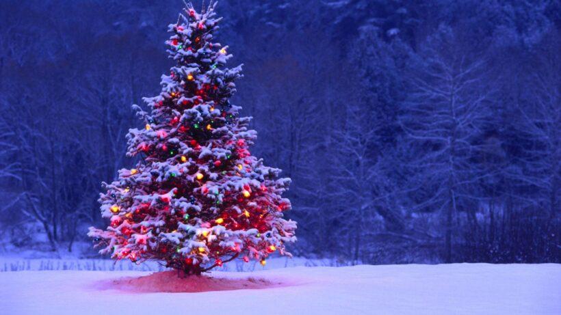 Hình ảnh cây thông Noel tuyệt đẹp
