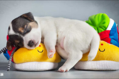 hình ảnh mệt mỏi đáng yêu dễ thương