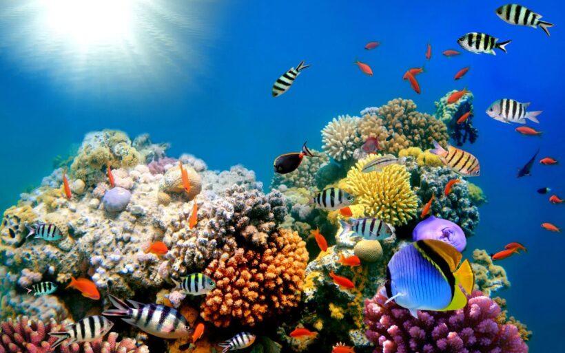 Hình ảnh những sinh vật biển đẹp