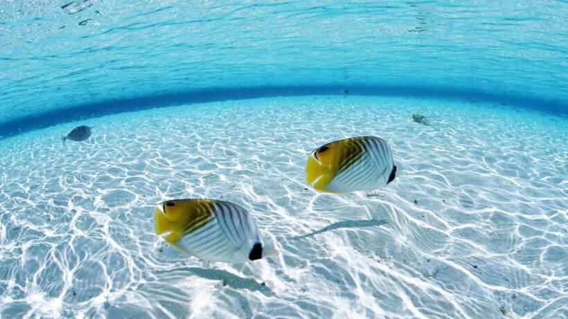 Hình ảnh những sinh vật ở đáy biển đẹp