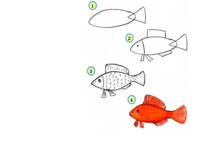 Các bước vẽ con Cá Chép