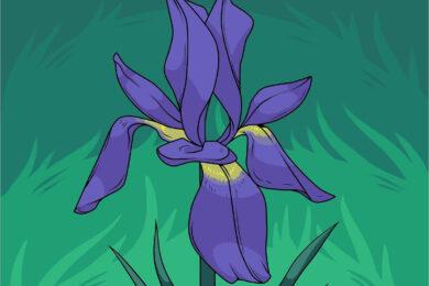 Cách vẽ bông hoa đơn giản, đẹp nhất