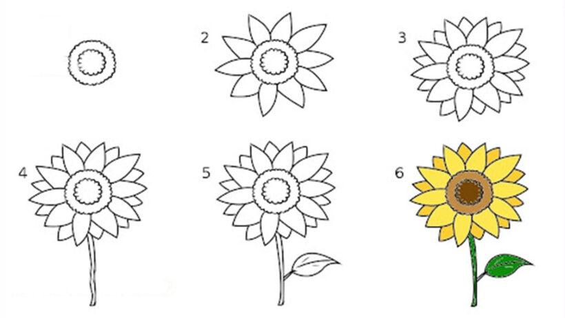 Cách vẽ bông hoa Hướng Dương