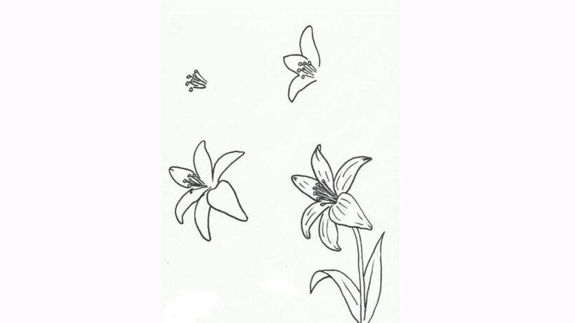 Cách vẽ bông hoa Ly