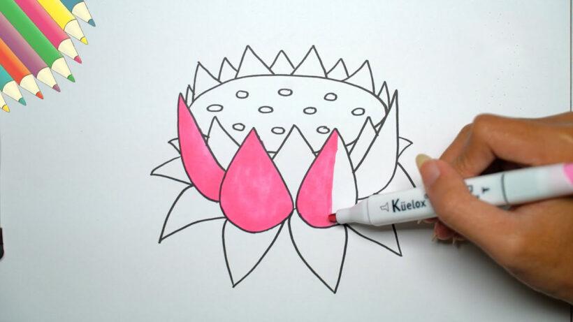 Cách vẽ bông hoa Sen