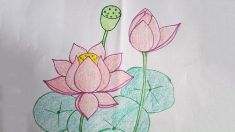 Cách vẽ bông hoa Sen đẹp