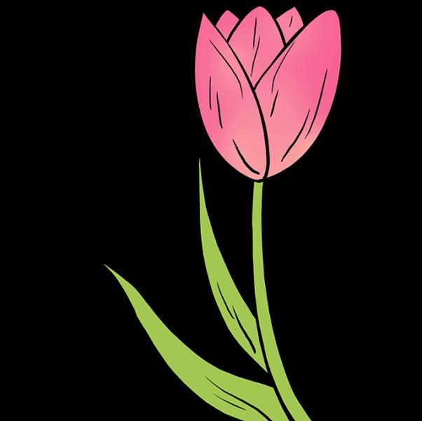 Cách vẽ bông hoa Tulip