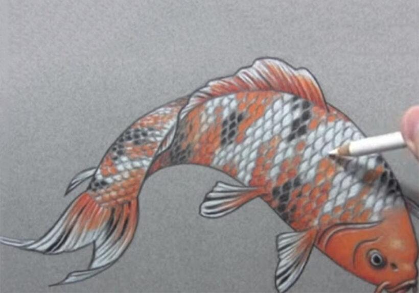 Cách vẽ Cá Chép bằng bút màu đẹp