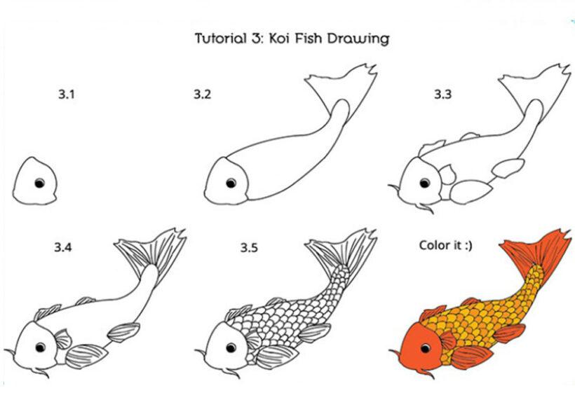 Cách vẽ Cá Chép Koi đẹp