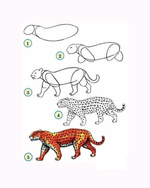 Cách vẽ con Báo