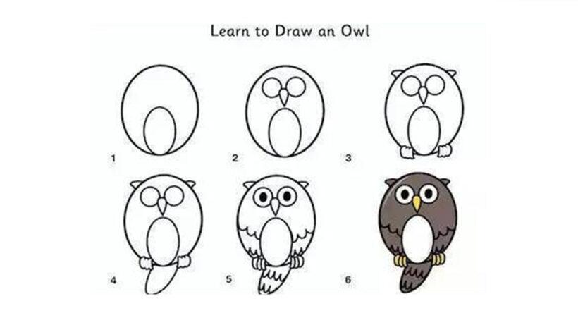 Cách vẽ con chim Cú