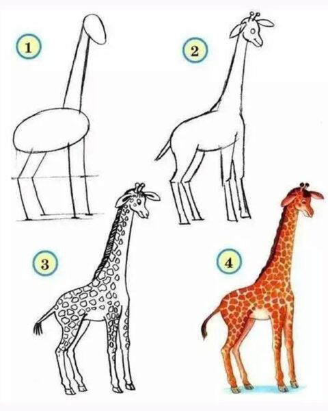 Cách vẽ con Hươu cao cổ