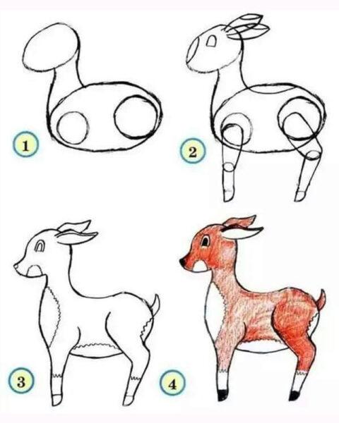Cách vẽ con Nai
