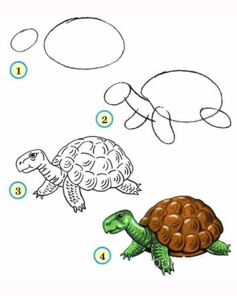 Cách vẽ con Rùa