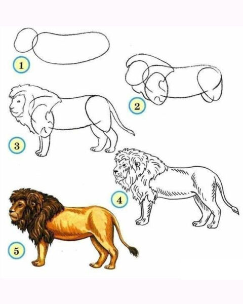 Cách vẽ con Sư Tử