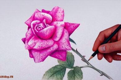 Cách vẽ hoa Hồng đơn giản mà đẹp nhất