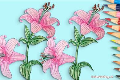 Cách vẽ hoa Ly, hoa Loa Kèn đơn giản mà đẹp