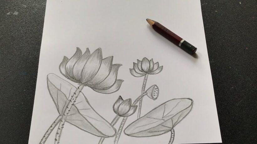 Cách vẽ hoa Sen bằng bút chì đẹp