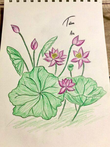 Cách vẽ hoa Sen bằng bút chì đơn giản