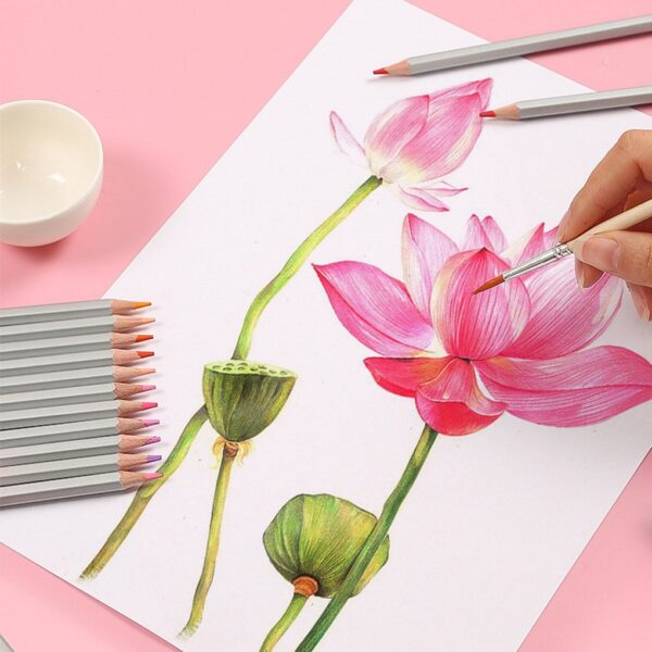 Cách vẽ hoa Sen bằng bút màu