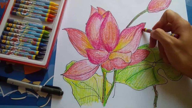 Cách vẽ hoa Sen bằng sáp màu