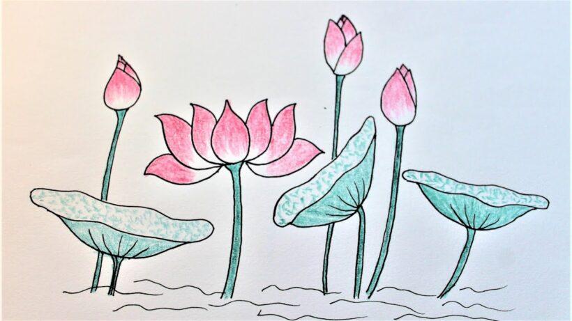 Cách vẽ hoa Sen, búp Sen