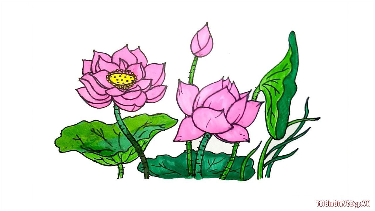 Cách vẽ hoa Sen đẹp, đơn giản nhất