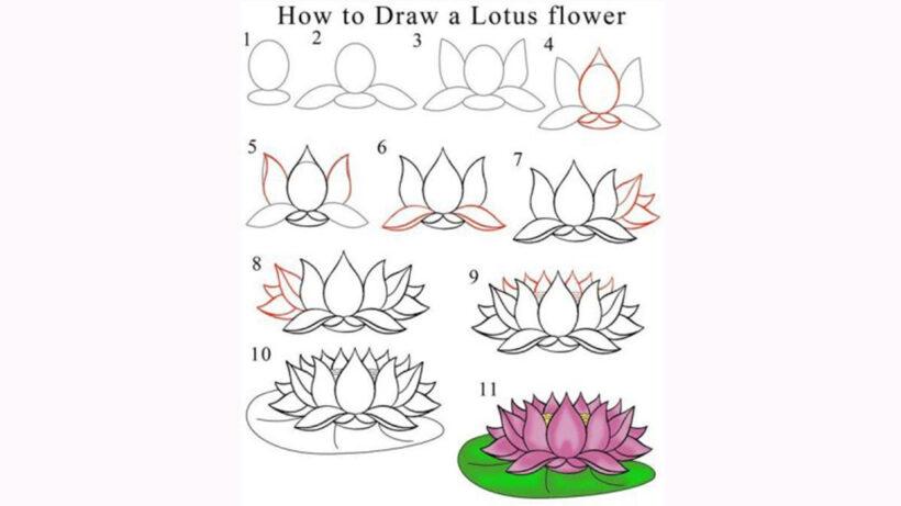 Cách vẽ hoa Sen đơn giản