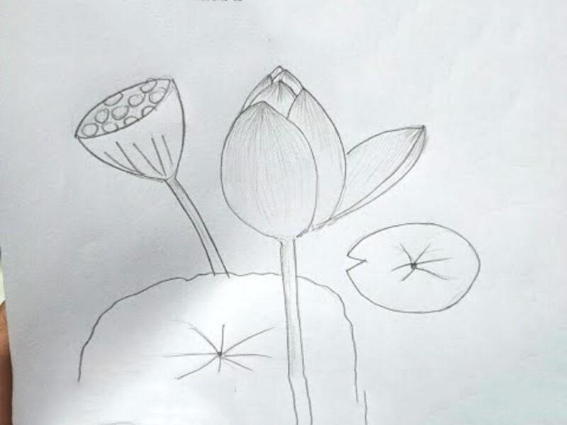 Cách vẽ hoa Sen đơn giản bằng bút chì