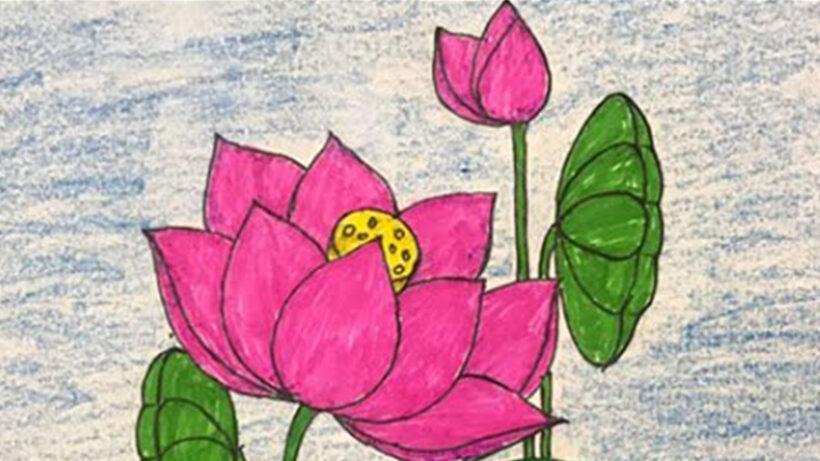 Cách vẽ hoa Sen đơn giản, dễ vẽ