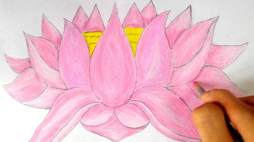Cách vẽ hoa Sen đơn giản mà đẹp