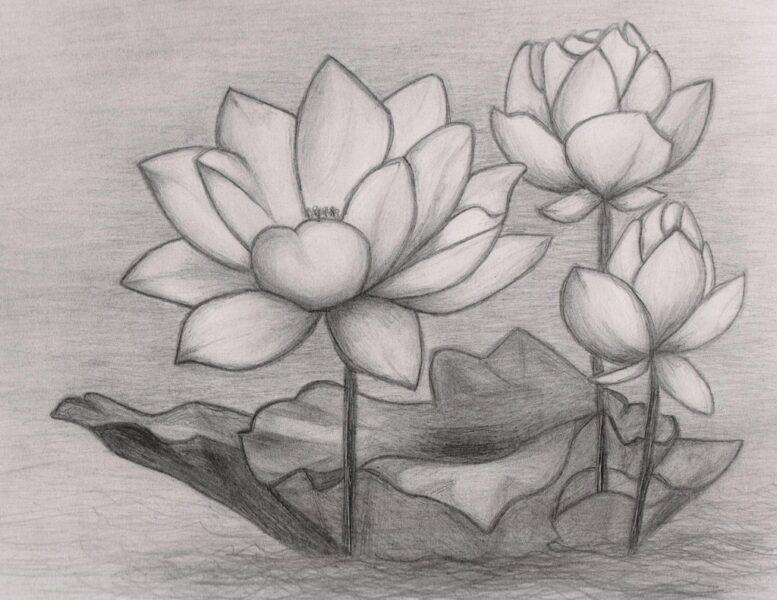 Cách vẽ hoa Sen đơn giản nhất bằng bút chì