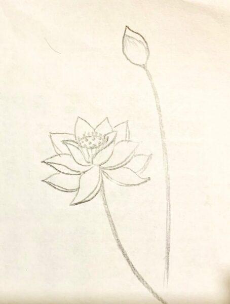 Cách vẽ hoa Sen và nụ